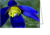 Pasqueflower Greeting Cards - Pasque Flower Blue 3 Greeting Card by Sharon  Talson