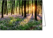 Simon Bratt Photography Greeting Cards - Path through bluebell woods Greeting Card by Simon Bratt Photography