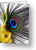 Turquoise And Brown Greeting Cards - Peacock Feather and Gladiola 2 Greeting Card by Sarah Loft