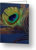 Ann Powell Greeting Cards - Peacock Feather Greeting Card by Ann Powell