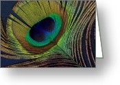 Ann Powell Greeting Cards - Peacock Feather on Square Greeting Card by Ann Powell