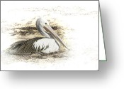 Pelican Greeting Cards - Pelican Greeting Card by Holly Kempe