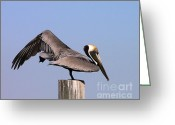 Al Powell Photography Usa Greeting Cards - Pelican Stretch Greeting Card by Al Powell Photography USA