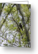 Birdwatcher Greeting Cards - Perched High In The Trees Greeting Card by Arlene Carmel