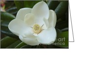 Fragrant Flowers Greeting Cards - Perfect Magnolia Greeting Card by Carol Groenen