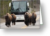 Buffalo Mixed Media Greeting Cards - Personal Escort - Touring Yellowstone Greeting Card by Photography Moments - Sandi