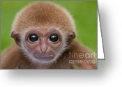 Primates Greeting Cards - Pick a Card Any Card Greeting Card by Ashley Vincent