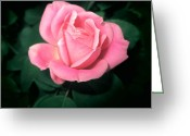 Diannah Lynch Greeting Cards - Pink Petals Greeting Card by Diannah Lynch