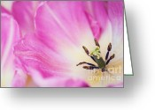Jenny Rainbow Greeting Cards - Pink Tulip. The Tulips of Holland Greeting Card by Jenny Rainbow