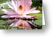 Carol Groenen Greeting Cards - Pink Water Lily Closeup Square  Greeting Card by Carol Groenen