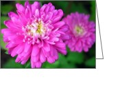 Flower Art Greeting Cards - Pink Zinnia Greeting Card by Christina Rollo