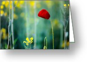 Rapeseed Greeting Cards - Poppy Greeting Card by Evgeni Dinev