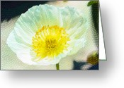 Watercolor Flowers Prints Greeting Cards - Poppy series - Beside the Sidewalk Greeting Card by Moon Stumpp
