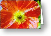 Botanical Greeting Cards Prints Greeting Cards - Poppy series - Facing the Sun Greeting Card by Moon Stumpp
