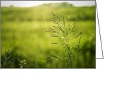 Beam Greeting Cards - Prairie Grass 2 Greeting Card by Scott Norris