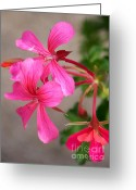 Pink Flower Prints Greeting Cards - Pretty In Pink Greeting Card by Eunice Miller
