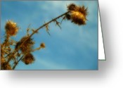 Parking Lot Greeting Cards - Prickly Weed Greeting Card by Gothicolors With Crows