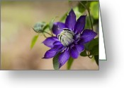 Purple Flower Greeting Cards - Purple Clematis Greeting Card by Rebecca Cozart