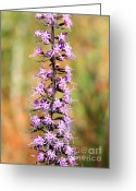 Carol Groenen Greeting Cards - Purple Wildflower Greeting Card by Carol Groenen