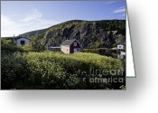 Rosemary Hawkins Greeting Cards - Quidi Vidi Village Newfoundland Greeting Card by Rosemary Hawkins