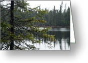 Larry Ricker Greeting Cards - Raindrops on an Evergreen Greeting Card by Larry Ricker