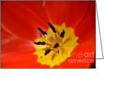 Randy J Heath Greeting Cards - Red and Yellow Tulip Greeting Card by Randy J Heath