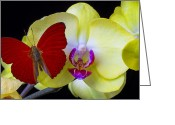 Exotic Orchid Greeting Cards - Red butterfly on yellow orchid Greeting Card by Garry Gay