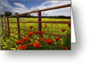 Buttercups Greeting Cards - Red Gate Greeting Card by Debra and Dave Vanderlaan