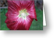 Reese Greeting Cards - Red Hollyhock Greeting Card by Joy Reese