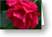 Maria Urso Greeting Cards - Red Rose 2013 Greeting Card by Maria Urso - Artist and Photographer