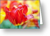 Jenny Rainbow Greeting Cards - Red Tulip. The Tulips of Holland Greeting Card by Jenny Rainbow