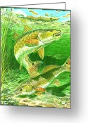 Fiddler Crab Greeting Cards - Redfish Haven Greeting Card by Carey Chen