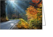 Autumn Roads Greeting Cards - Road to Glory Greeting Card by Lynn Bauer