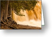 North Shore Greeting Cards - Rooted In Spring Greeting Card by Mary Amerman