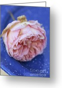 Rose Photos Greeting Cards - Rose Flower Greeting Card by Frank Tschakert