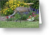 Cranes In Florida Greeting Cards - Sandhill Visits the Garden Greeting Card by Carol Groenen