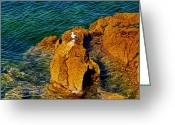 Karo Evans Greeting Cards - Seagull on a rock Greeting Card by Karo Evans