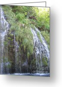 Nestled In Greeting Cards - Shasta Aquifer  Greeting Card by Laura Hamill