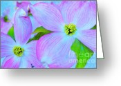 Tara Turner Greeting Cards - Signs of Spring Greeting Card by Tara Turner