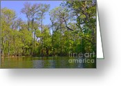 River Scenes Greeting Cards - Silver River Florida Greeting Card by Christine Till