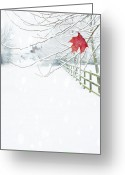 Red Maple Greeting Cards - Single Red Leaf Greeting Card by Christopher Elwell and Amanda Haselock