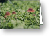 Toadstools Greeting Cards - Slightly Magical Mushrooms Greeting Card by Heather Applegate