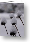 Brian Jones Greeting Cards - Snow Flowers Greeting Card by Brian Jones