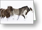 Quarter Horses Greeting Cards - Snowy March II Greeting Card by Carol Walker