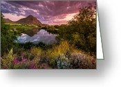 Phoenix Greeting Cards - Sonoran Desert Spring Bloom Sunset  Greeting Card by Scott McGuire