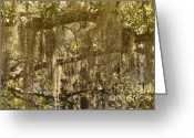 Oak Tree Greeting Cards - Spanish Moss on Live Oaks Greeting Card by Christine Till