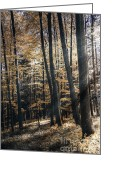 Bruno Santoro Greeting Cards - Spring Forest Greeting Card by Bruno Santoro