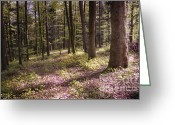 Bruno Santoro Greeting Cards - Spring Forest2 Greeting Card by Bruno Santoro