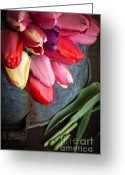 Fielding Greeting Cards - Spring Tulips Greeting Card by Edward Fielding