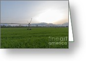 Cultivated Landscapes Greeting Cards - Sprinklers on a green field Greeting Card by Mats Silvan